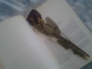 acerca de las rosas negras